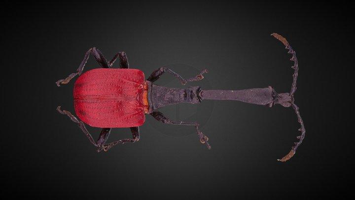 Trachelophorus giraffa 3D Model