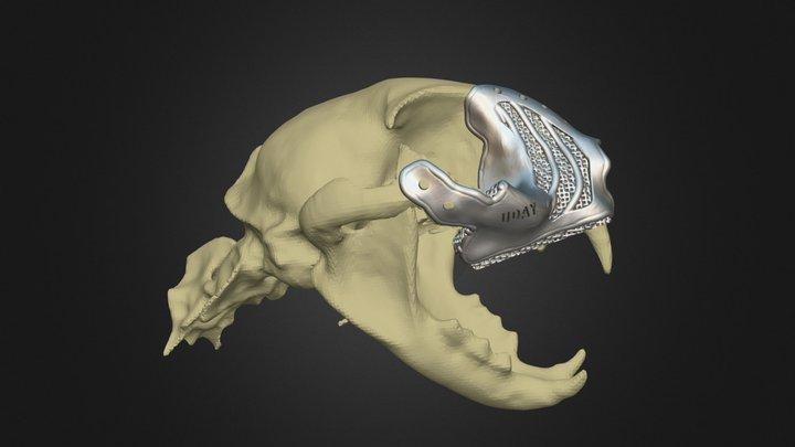 Cat cranioplasty titanium 3D Model