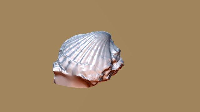 Pectinídeo da Praia da Rocha (Miocénico) 3D Model