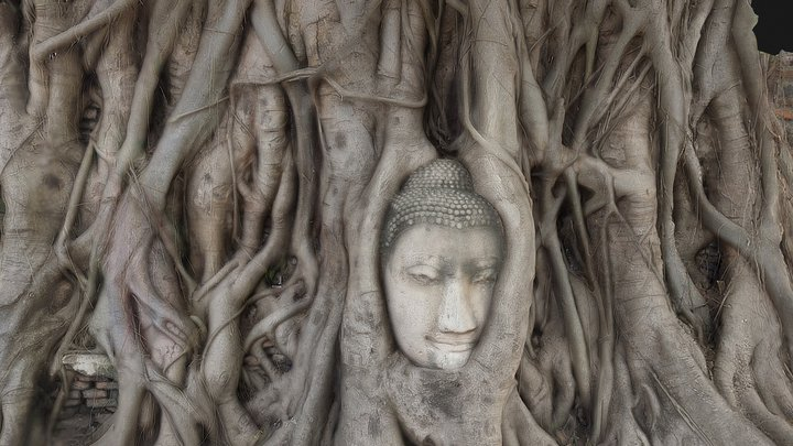 Wat Mahathat's Buddha Head 3D Model