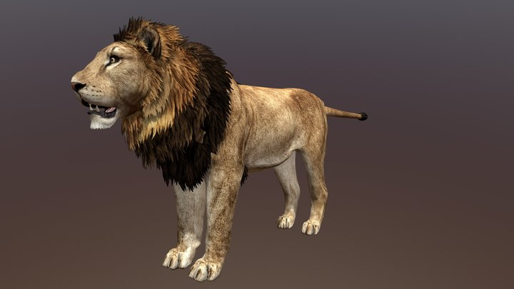 Male Lion 3D Model