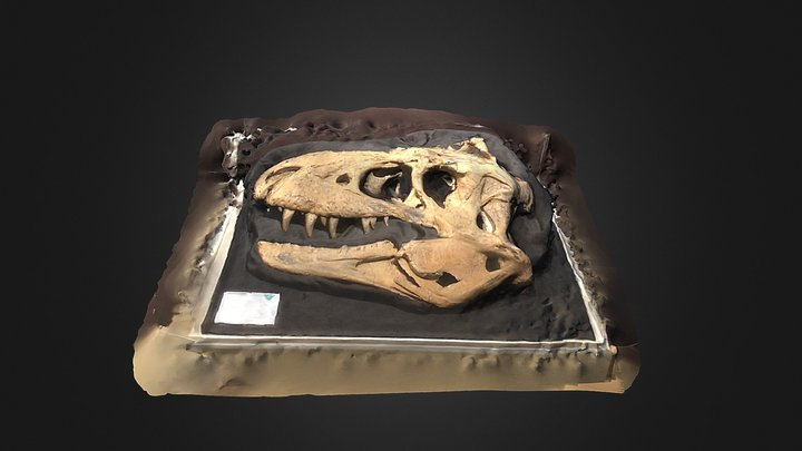 Bisti Beast Skull Fossil 3D Model