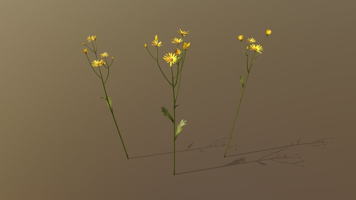 Golden Marguerite Asset Pack 3D Model