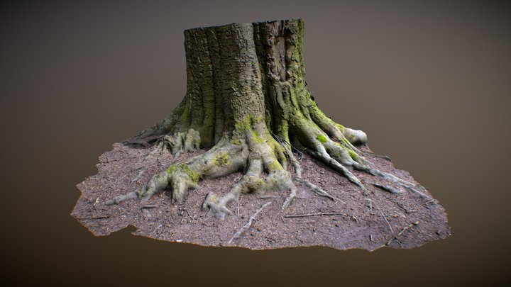 Tree trunk photogrammetry 3D Model