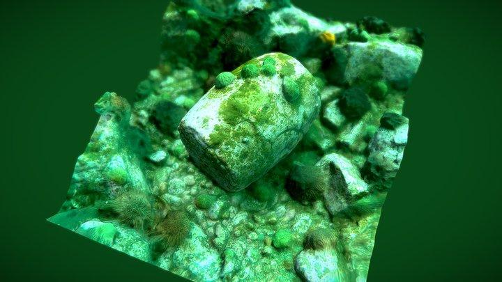 Nanette Wreck - Lime Barrel 3D Model