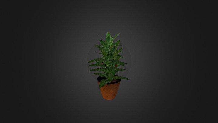 Basic Plants + Flowerpot (WIP) - City Scene 3D Model