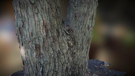 twins Tree Stump 3D Model
