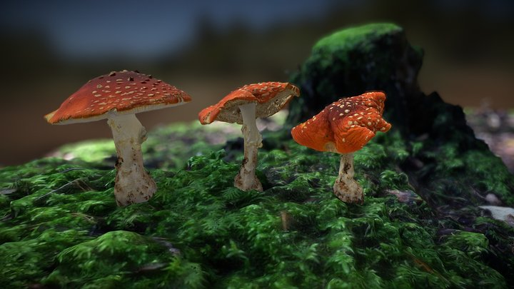 Fly agaric drying up 3D Model