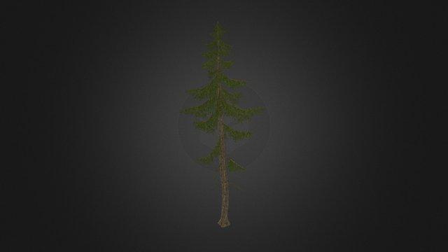 lowpoly spruce tree 3D Model