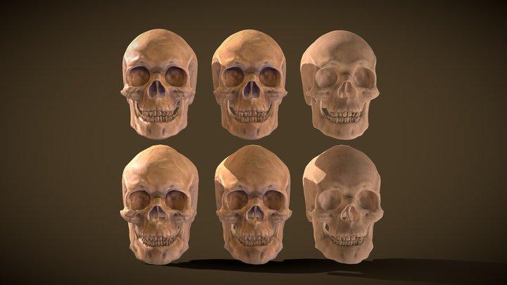 Human Skull High/Low 3D Model