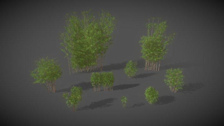 AS01 Bambusa Vulgaris (Golden Bamboo) 3D Model