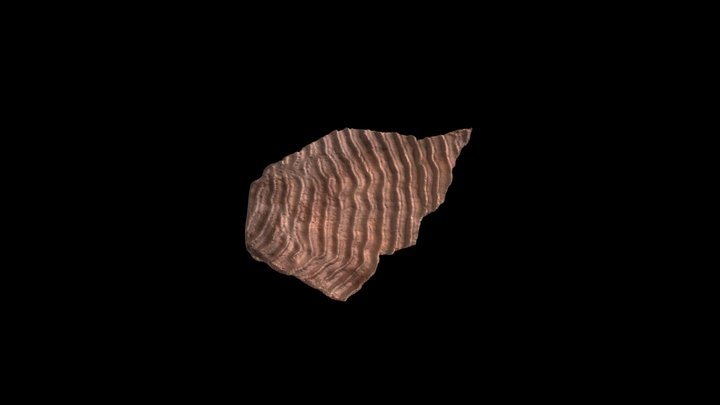 X Pachyseris speciosa (Dana, 1846) 3D Model