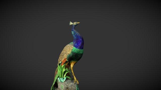1878 Loch Ard Minton Peacock: shipwreck survivor 3D Model