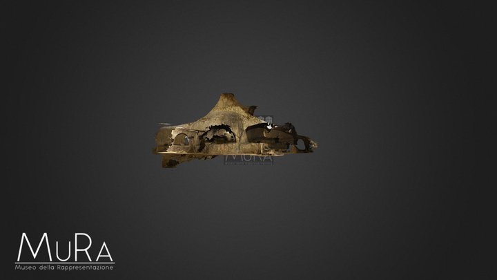 Adelphia 3D Model