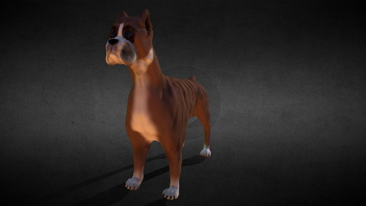 Blue eyed boxer dog 3D Model