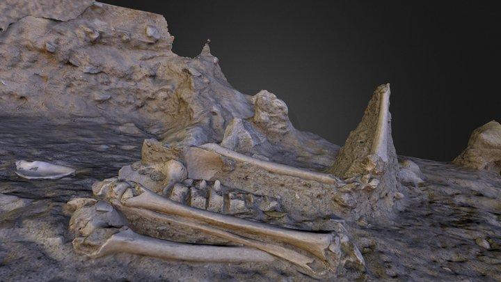 Bone Cluster 3D Model