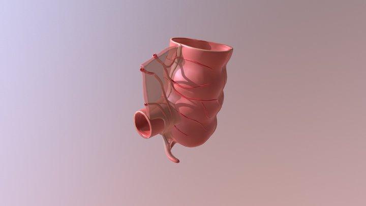 Appendix 3D Model