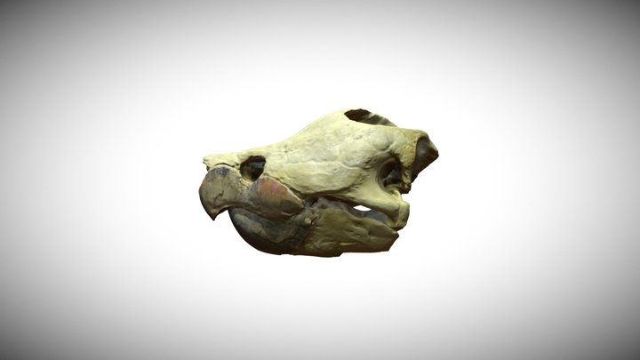 Alligator snapping turtle 3D Model