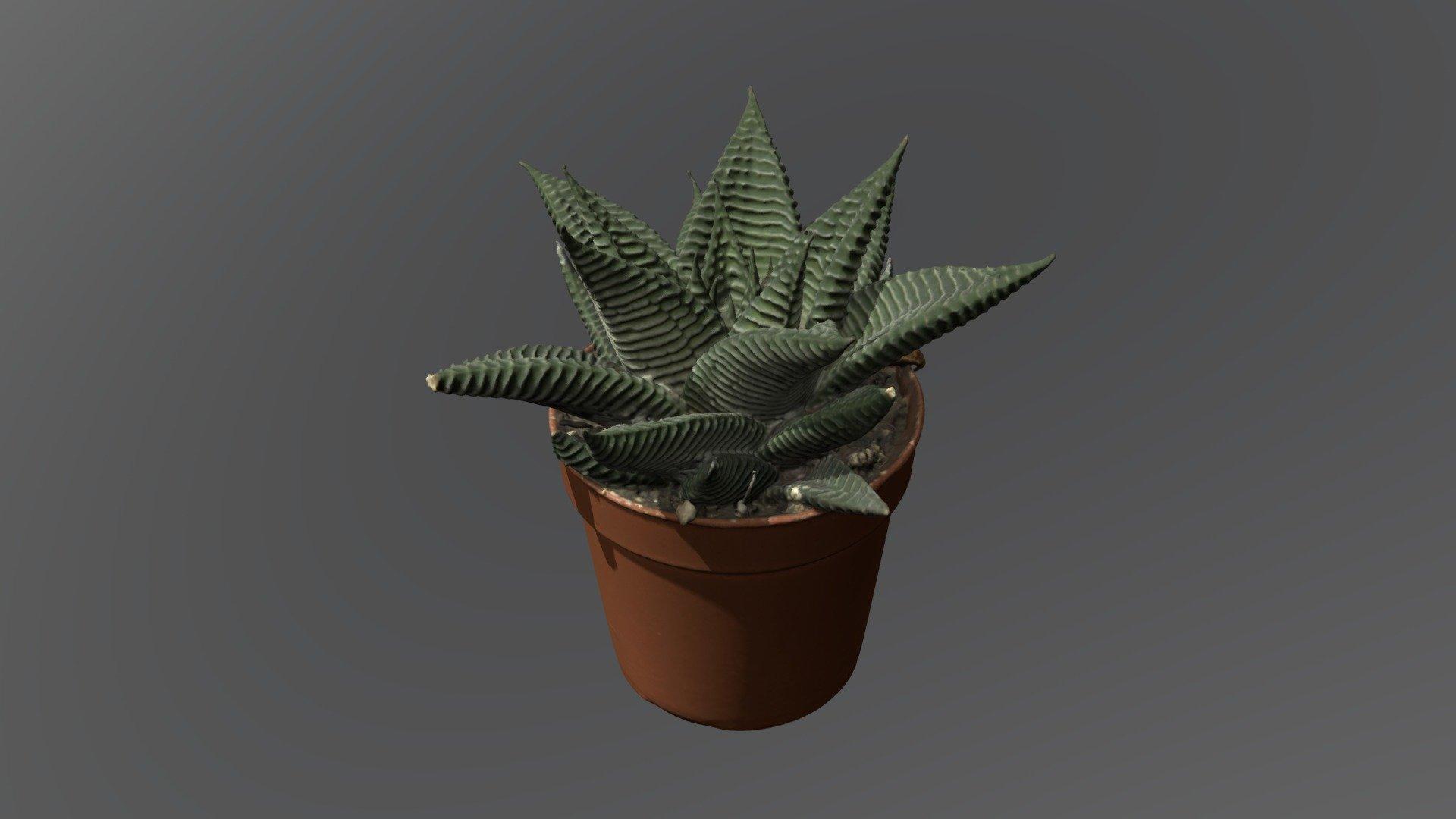best place to buy succulents online