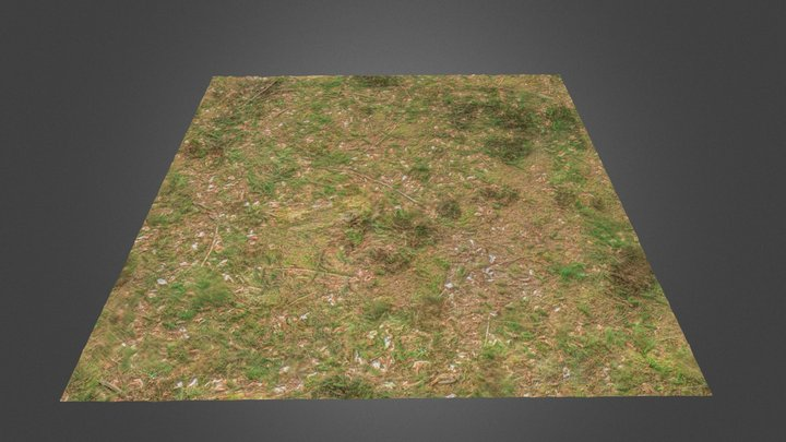 mossy Forest Ground III 3D Model