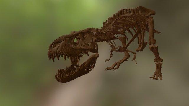 Tyrannosaurus Rex Trix 3D Model