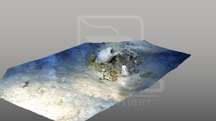 Habitat Mapping - Environmental Survey 3D Model