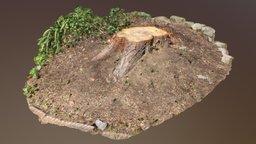 Tree Trunk (Photogrammetry) 3D Model