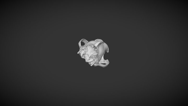 DOG skull 3D Model