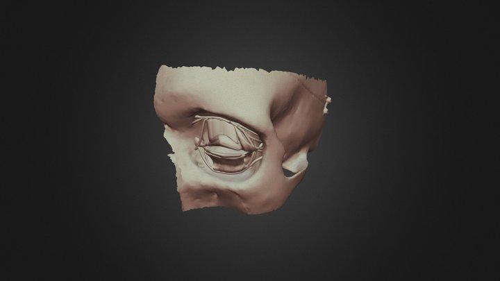 Primitive Eye V1 3D Model