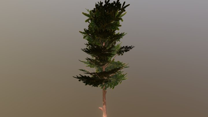 Conifer Tree Low-Poly (mobile) 3D Model