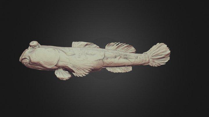 Shuttles hoppfish (Periophthalmus modestus) 3D Model