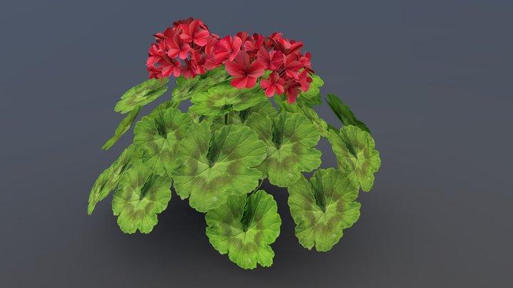 Geranium Game Asset 3D Model