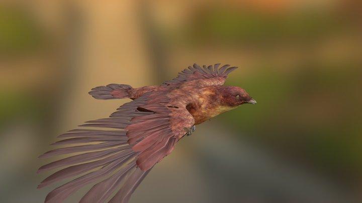 Realistic Bird 3D Model