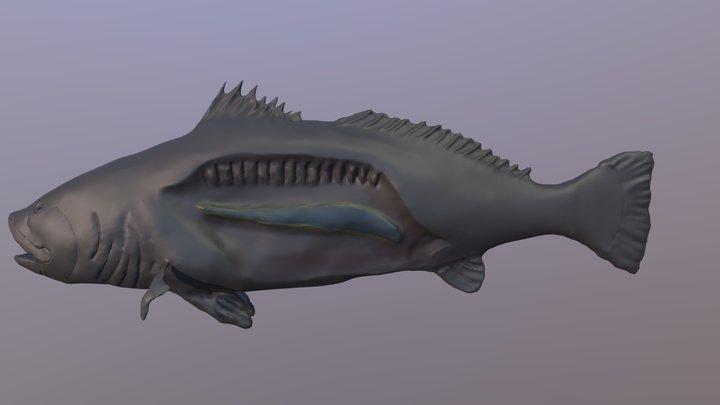 Totoaba 3D Model
