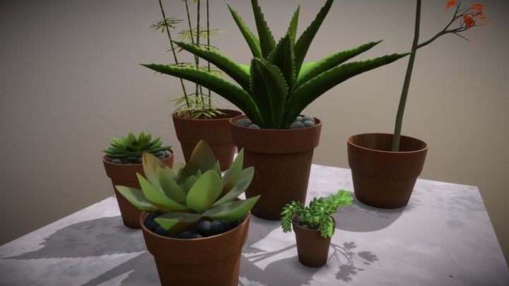 Succulent Plants Obj 3D Model
