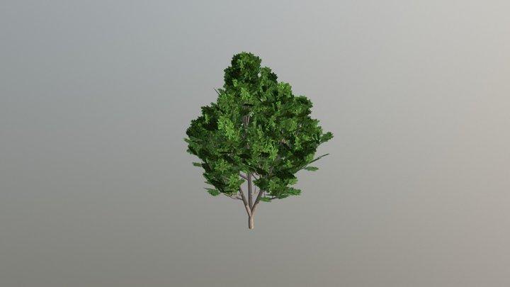 Hazelnut Bush 3D Model