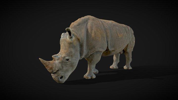 Model 56A - Southern White Rhino 3D Model