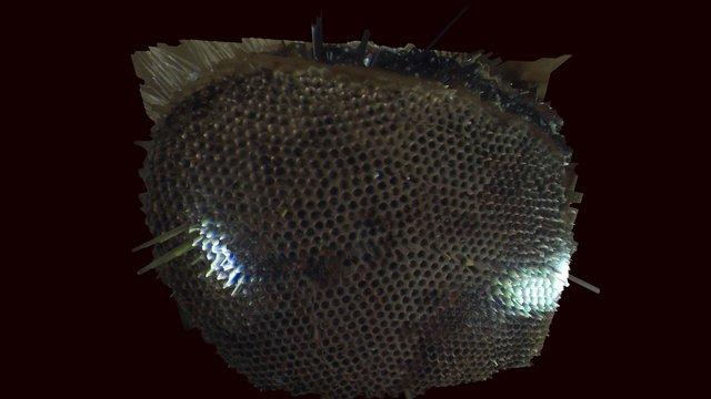 waterbug eye 3D Model