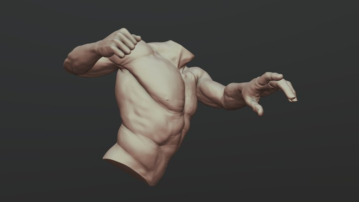 Torso With Arms 3 3D Model