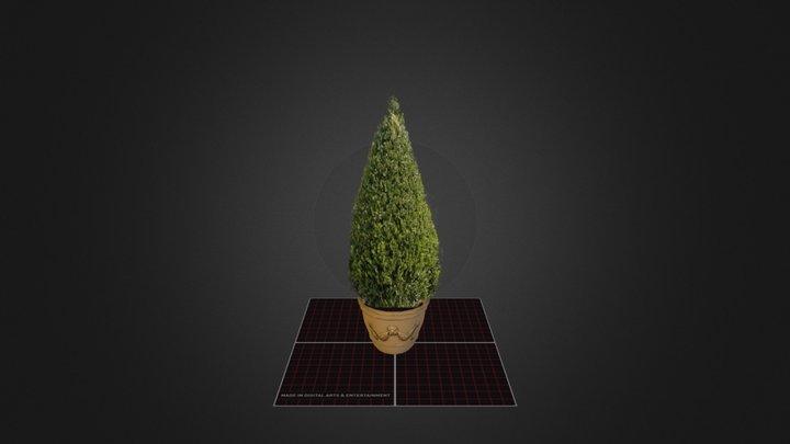 Examen 3D Prop Buxus 3D Model