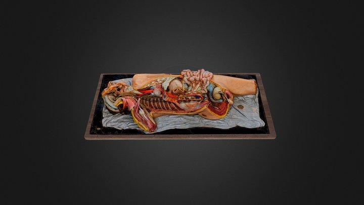Wachsmodell einer präparierten Leiche 3D Model