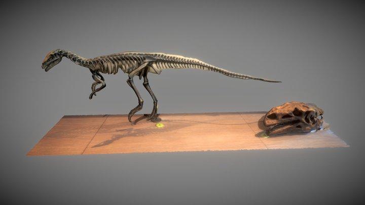 Coelophysis bauri 3D Model