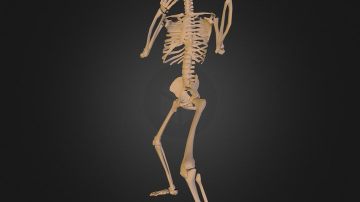 29human-skeleton.3DS 3D Model