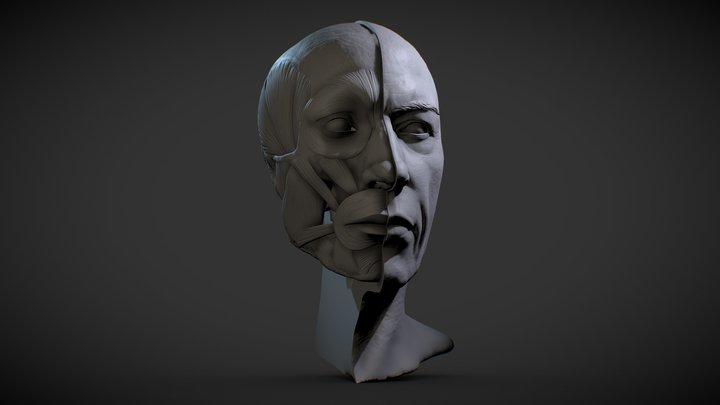 Head Skull Decimated V001 3D Model
