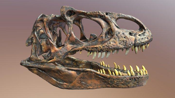 Allosaurus fragilis, by Thomas Hanlon 3D Model