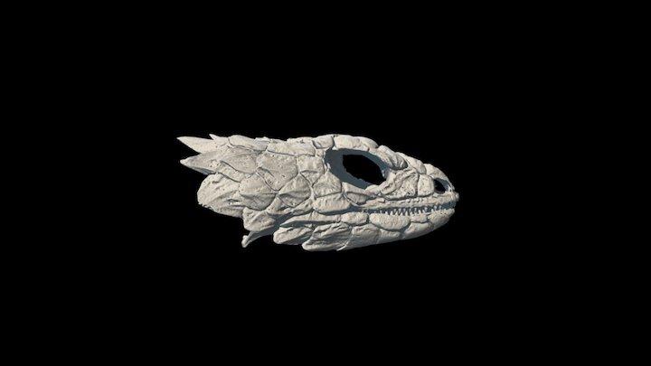 Smaug giganteus 3D Model