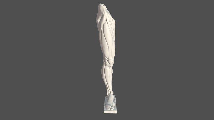 anatomia pierna derecha 3D Model