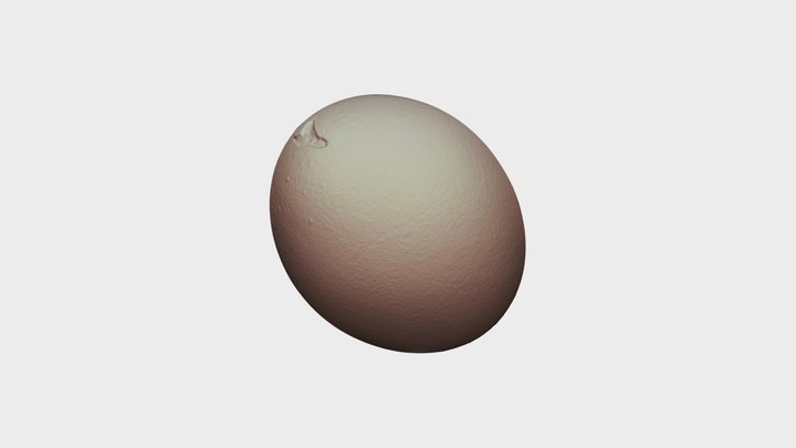 Real Chicken Egg w Crack on Top Natural 3D Scan 3D Model