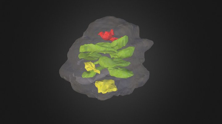 Pararaucaria collinsonae (All Ovules) 3D Model