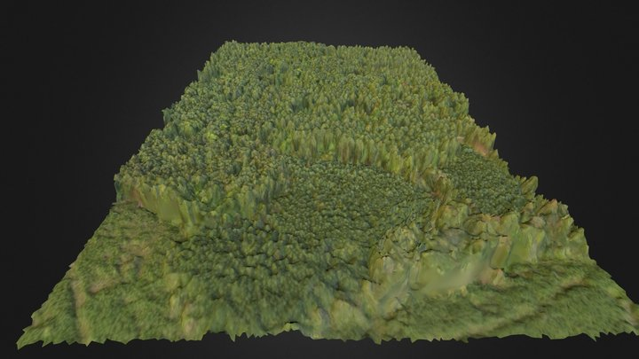 Duke Forest Hardwood Plot 3D Model